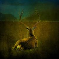 Buy canvas prints of Deer by Debra Kelday