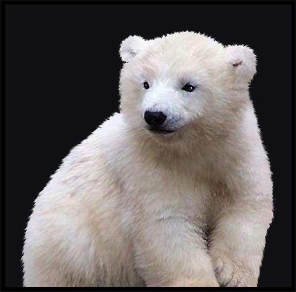 Polar Bear Cub Canvas print by Debra Kelday