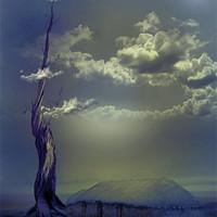 Buy canvas prints of Beanstalk 2 by Debra Kelday