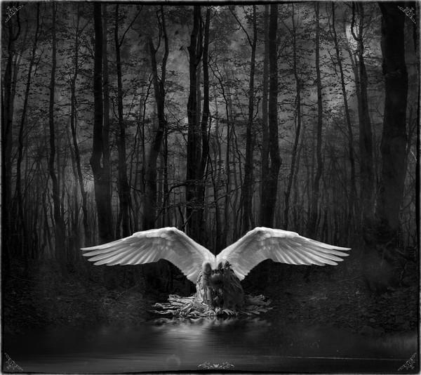 Fallen Angel Canvas print by Debra Kelday