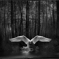 Buy canvas prints of Fallen Angel by Debra Kelday