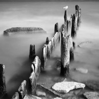 Buy canvas prints of Old Posts by Banjiwayume Photography