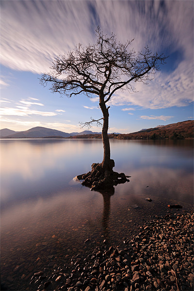Lone tree in water Canvas print by Scottish Landscape and Wildlife Canvas Print