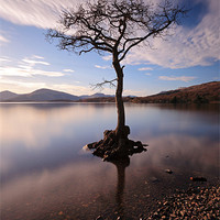 Buy canvas prints of Lone tree in water by Scottish Landscape and Wildlife Canvas Print