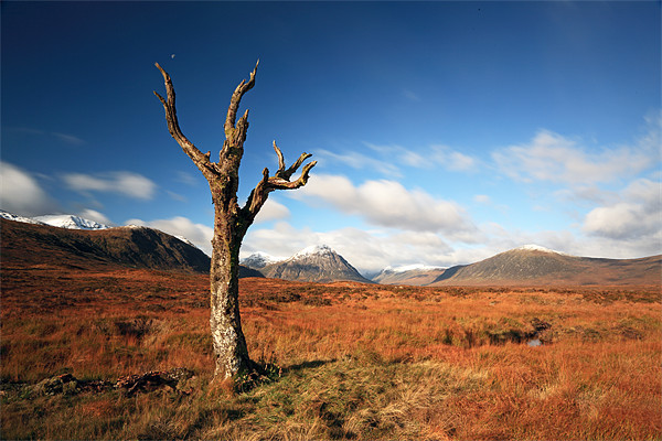 Lone tree, Rannoch moor Canvas print by Scottish Landscape and Wildlife Canvas Print