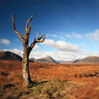 Buy canvas prints of Lone tree, Rannoch moor by Scottish Landscape and Wildlife Canvas Print