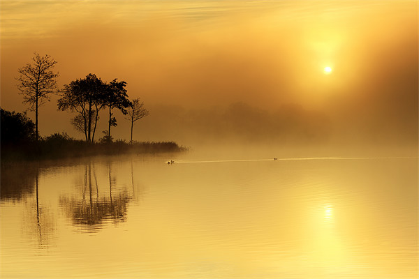 Loch Ard morning glow Canvas Print by Scottish Landscape and Wildlife Canvas Print