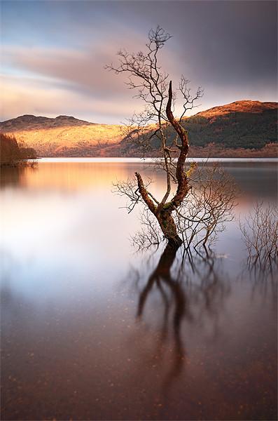 Loch Lomond Canvas print by Scottish Landscape and Wildlife Canvas Print