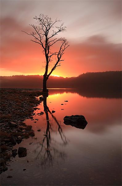 Loch Ard Sunrise Canvas Print by Scottish Landscape and Wildlife Canvas Print