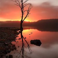 Buy canvas prints of Loch Ard Sunrise by Scottish Landscape and Wildlife Canvas Print