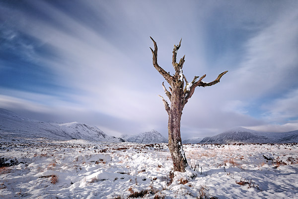 Rannoch Moor Tree, Glencoe Canvas Print by Scottish Landscape and Wildlife Canvas Print