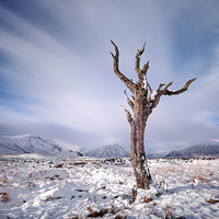 Buy canvas prints of Rannoch Moor Tree, Glencoe by Scottish Landscape and Wildlife Canvas Print