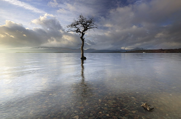 Loch Lomond Tree Canvas Print by Scottish Landscape and Wildlife Canvas Print