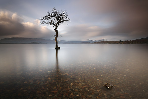Loch Lomond Tree Canvas Print by Scottish Landscape and Wildlife Canvas Print