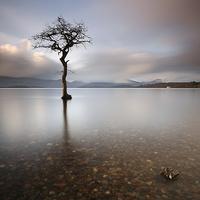 Buy canvas prints of Loch Lomond Tree by Scottish Landscape and Wildlife Canvas Print