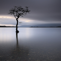 Buy canvas prints of Loch Lomond Tree by Scottish Landscape and Wildlife Canvas Print