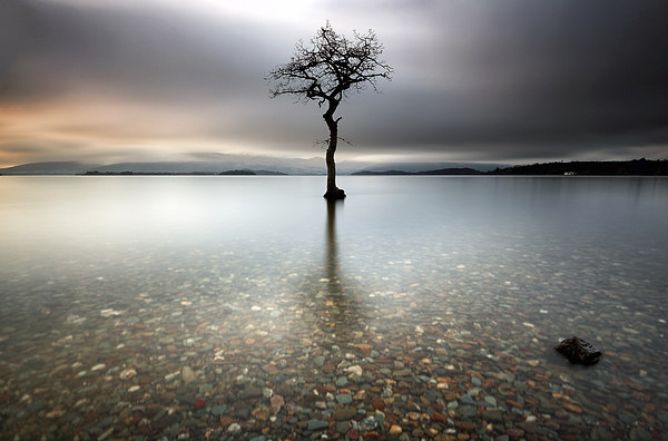Lone Tree Canvas print by Scottish Landscape and Wildlife Canvas Print