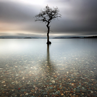 Buy canvas prints of Lone Tree by Scottish Landscape and Wildlife Canvas Print