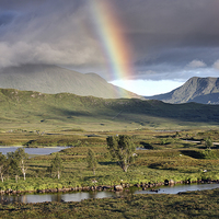 Buy canvas prints of  Rannoch Moor Rainbow by Scottish Landscape and Wildlife Canvas Print