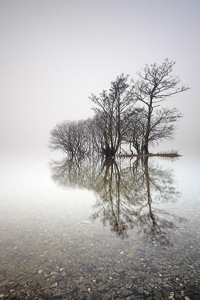 Misty Trees  Canvas Print by Scottish Landscape and Wildlife Canvas Print