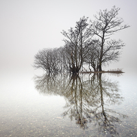 Buy canvas prints of Misty Trees  by Scottish Landscape and Wildlife Canvas Print