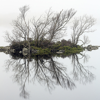 Buy canvas prints of  Glencoe trees in the mist by Scottish Landscape and Wildlife Canvas Print