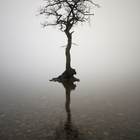 Buy canvas prints of  Milarrochy bay tree by Scottish Landscape and Wildlife Canvas Print