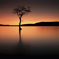 Buy canvas prints of  Loch Lomond Afterglow by Scottish Lands and Wildlife C