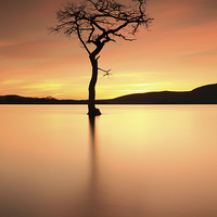Buy canvas prints of  Lone Tree Afterglow by Grant Glendinning