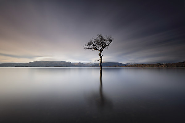Solitary Tree  Canvas Print by Grant Glendinning