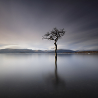 Buy canvas prints of Solitary Tree  by Grant Glendinning