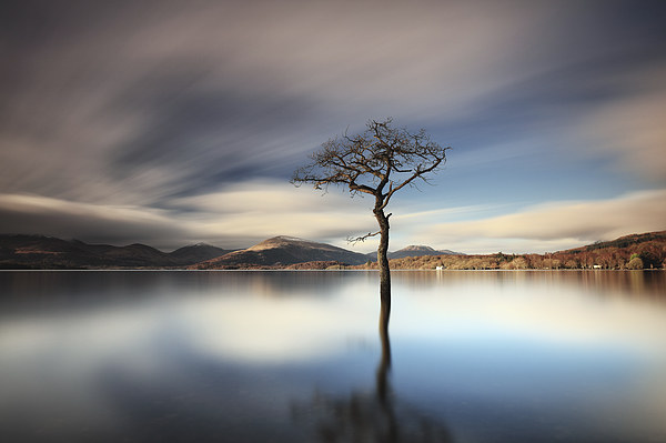 Milarrochy Tree Canvas print by Grant Glendinning