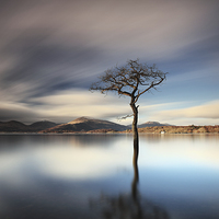 Buy canvas prints of Milarrochy Tree by Grant Glendinning