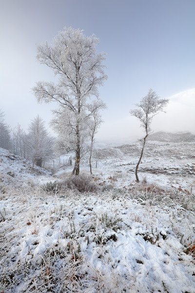 Glen Shiel Misty Winter Trees Canvas Print by Grant Glendinning