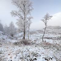Buy canvas prints of Glen Shiel Misty Winter Trees by Grant Glendinning