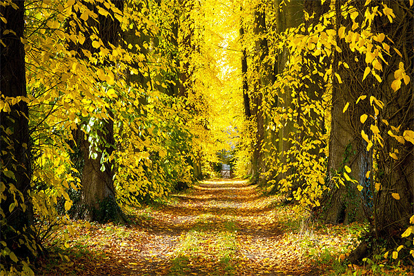 Autumn Leaves Canvas print by Ian Collins