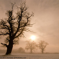 Buy canvas prints of Trees in Mist by Ian Collins