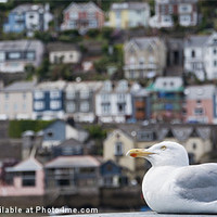 Buy canvas prints of Seagull by Andrew Berry