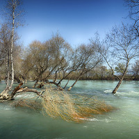 Buy canvas prints of Water Logged by angela wallace