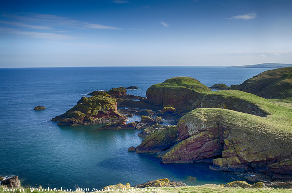Cliff tops at St Abbs Scotland Canvas Print by Angela Wallace