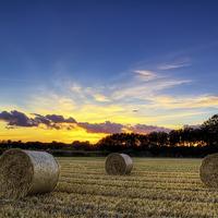 Buy canvas prints of Braunton Greatfield North Devon by Dave Wilkinson  North Devon Photography