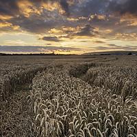 Buy canvas prints of Braunton Greatfield North Devon by Dave Wilkinson North Devon Ph