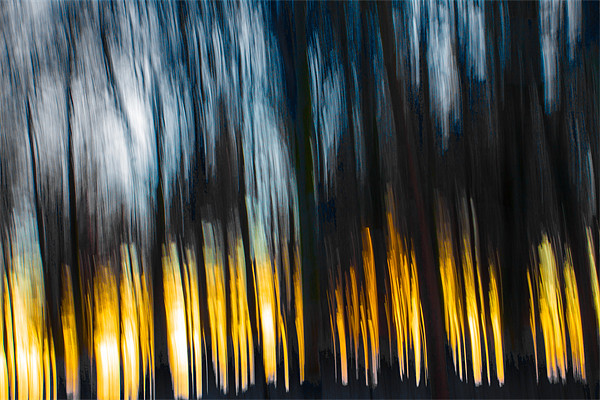 Forest Sunset in the Snow Framed Mounted Print by Derek Beattie