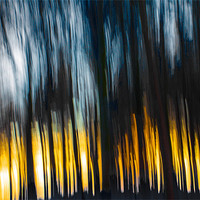 Buy canvas prints of Forest Sunset in the Snow by Derek Beattie