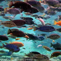 Buy canvas prints of Tropical Fish by William Attard McCarthy