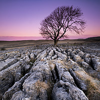 Buy canvas prints of The Lone Tree by Gary Mather