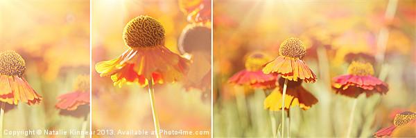 Sunlit Orange Helenium Flowers Triptych Canvas print by Natalie Kinnear