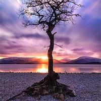Buy canvas prints of Canvas print Loch Lomond Milarrochy Bay Tree by Fine Art by John Farnan