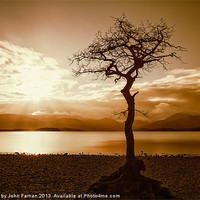 Buy canvas prints of Milarrochy Bay Tree Loch Lomond by Fine Art by John Farnan
