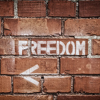 Buy canvas prints of Freedom  by John Farnan